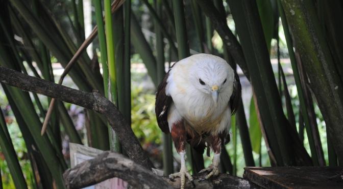 FotoFolio: Philippine Eagle Center, Davao (eagles, and more!)