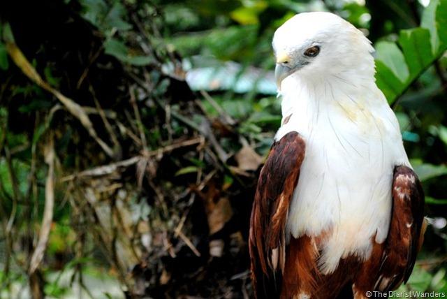 E - Eagles