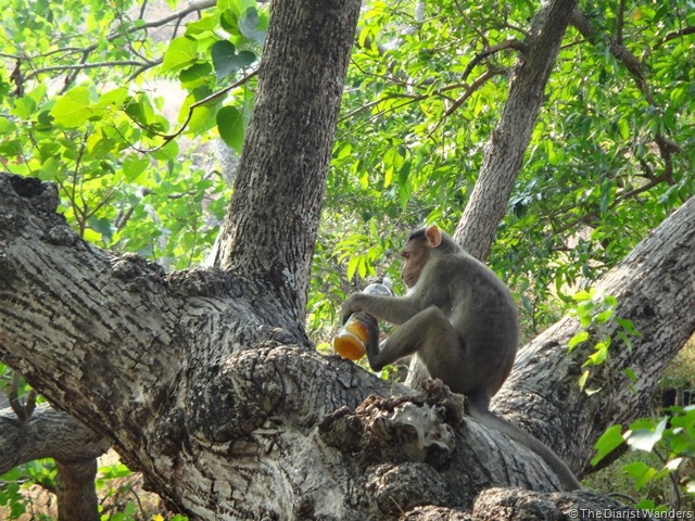My 25th in Travel - November The Monkey and its mango juice at Elephanta Island