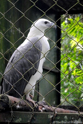 White and Grey Bird